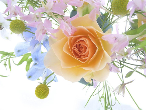 Начало първа пролет цветя топ